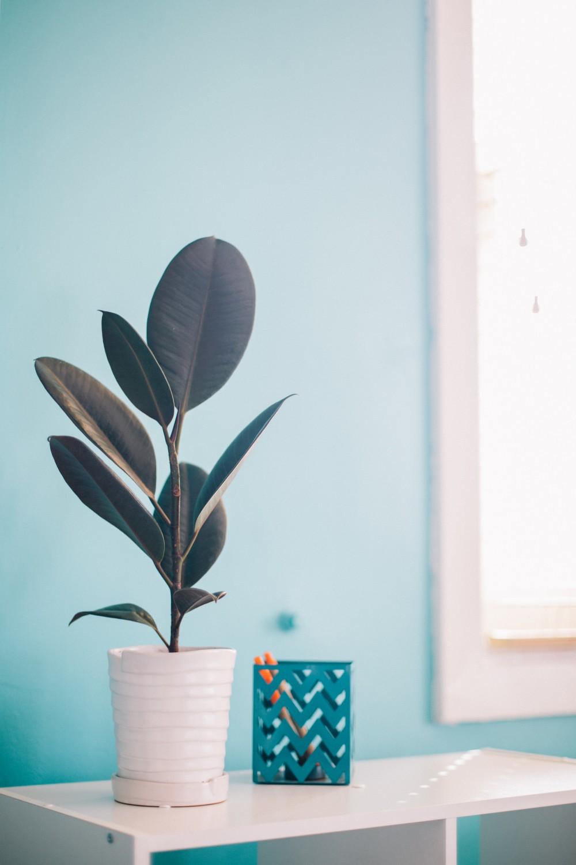 plants-home