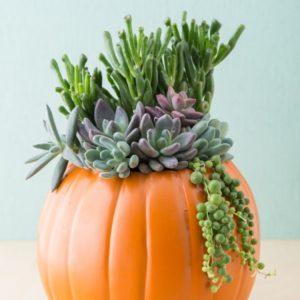 succulent-pumpkin-centerpiece